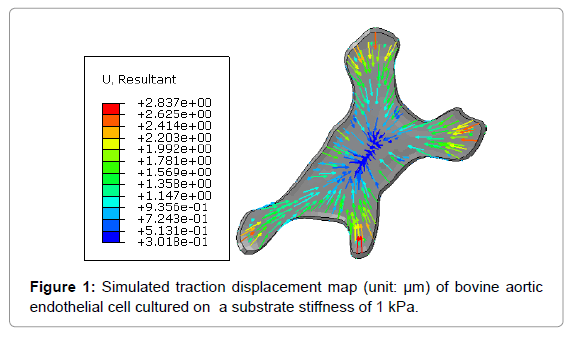 biosensors-bioelectronics-simulated-traction-displacement