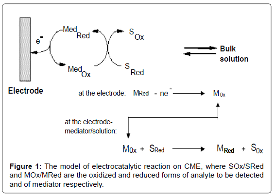 biosensors-bioelectronics-the-model-electrocatalytic