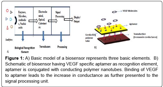 biosensors-journal-Basic-model-biosensor