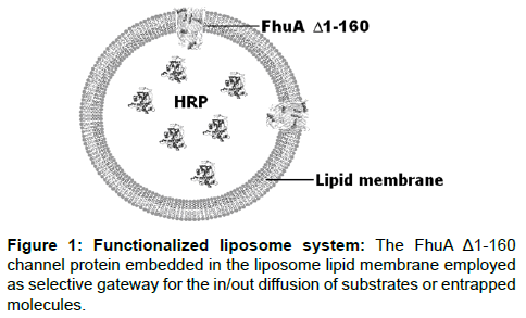 biosensors-journal-Functionalized-liposome