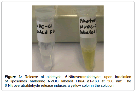 biosensors-journal-Release-aldehyde