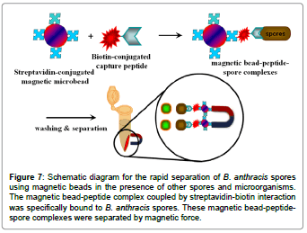 biosensors-journal-schematic-diagram-rapid-separation