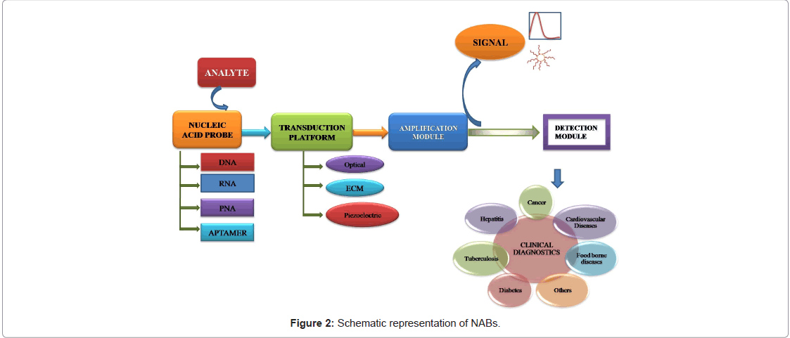 biosensors-journal-Schematic-representation