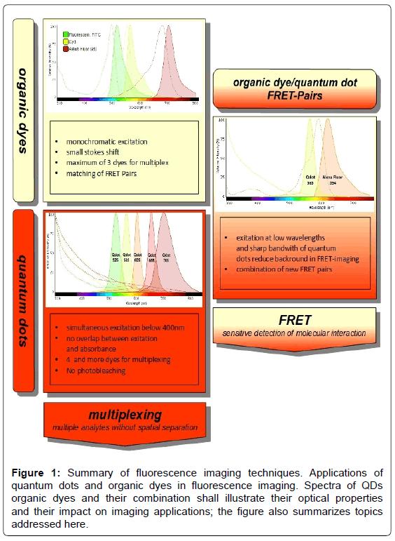 biosensors-journal-Summary-fluorescence-imaging-techniques