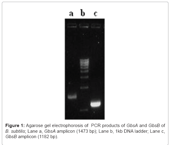 biotechnology-biomaterials-Agarose-gel