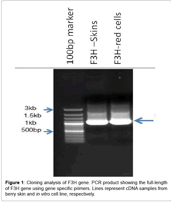biotechnology-biomaterials-Cloning-analysis