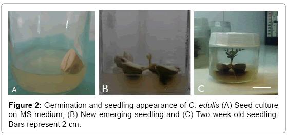 biotechnology-biomaterials-Germination-seedling