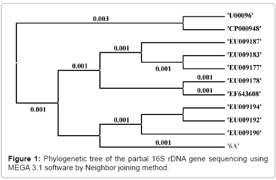 biotechnology-biomaterials-Phylogenetic-tree