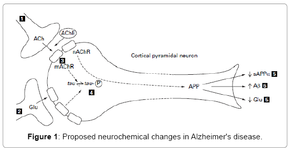 biotechnology-biomaterials-Proposed-neurochemical