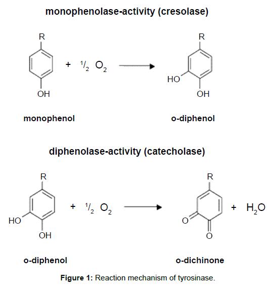 biotechnology-biomaterials-Reaction-mechanism