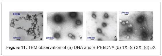 biotechnology-biomaterials-TEM-observation