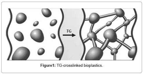 biotechnology-biomaterials-TG-crosslinked