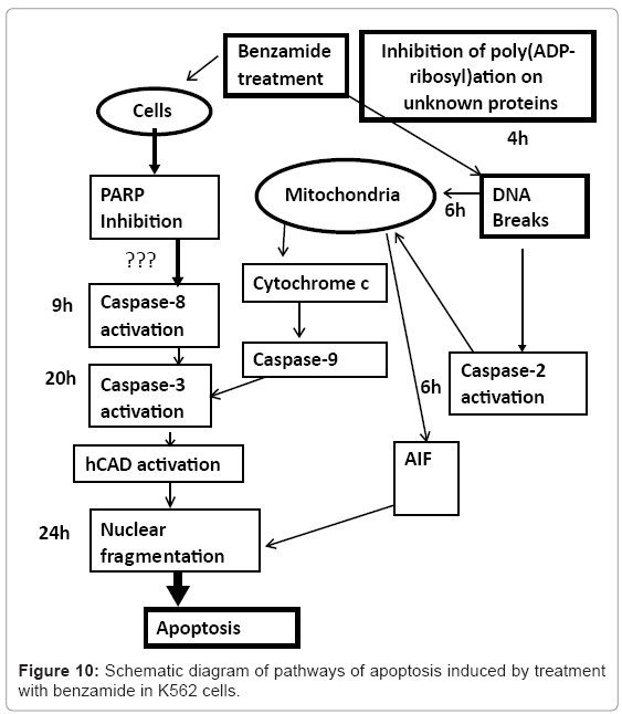 biotechnology-biomaterials-apoptosis-induced