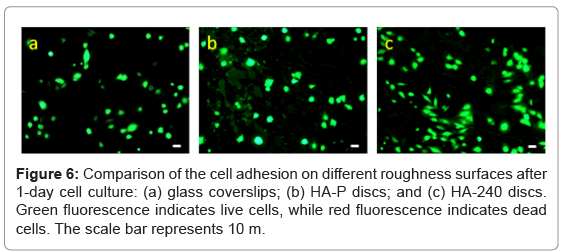 biotechnology-biomaterials-cell-adhesion