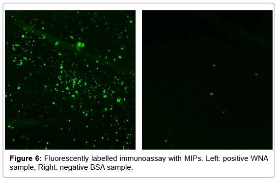 biotechnology-biomaterials-immunoassay