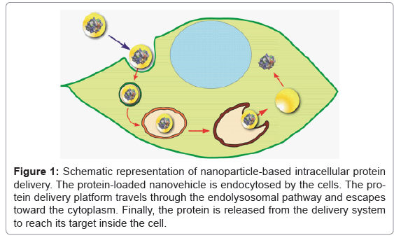 biotechnology-biomaterials-nanoparticle-based