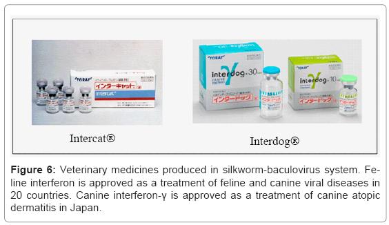 Manufacturing Pharmaceutical-Grade Interferons Using
