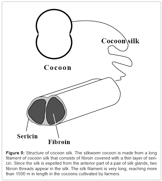 biotechnology-biomaterials-silkworm-cocoon