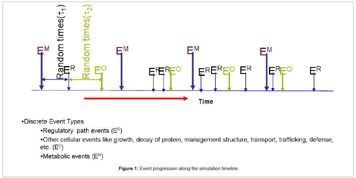 biotechnology-biomaterials-simulation-timeline