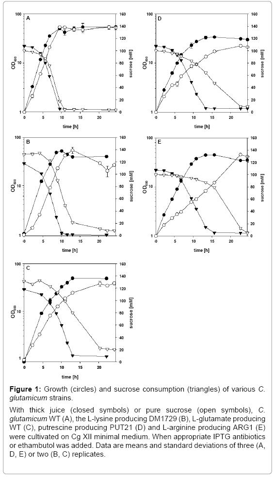 biotechnology-biomaterials-sucrose-consumption