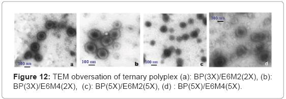 biotechnology-biomaterials-ternary-polyplex