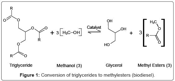 biotechnology-biomaterials-triglycerides
