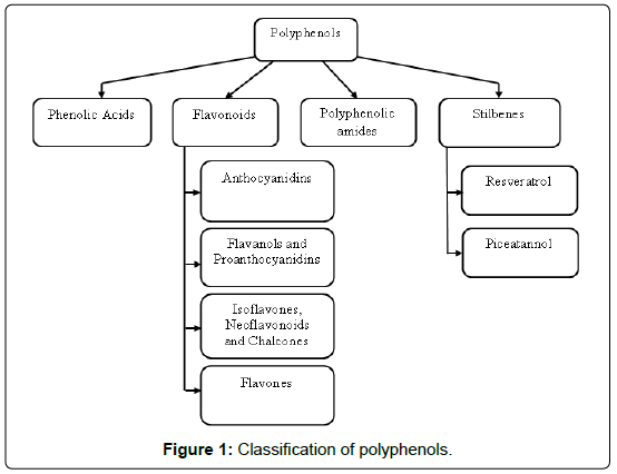 blood-disorders-transfusion-Classification-polyphenols