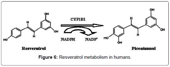 blood-disorders-transfusion-Resveratrol-metabolism