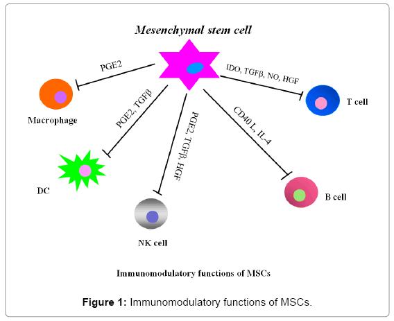 business-management-review-Immunomodulatory-functions