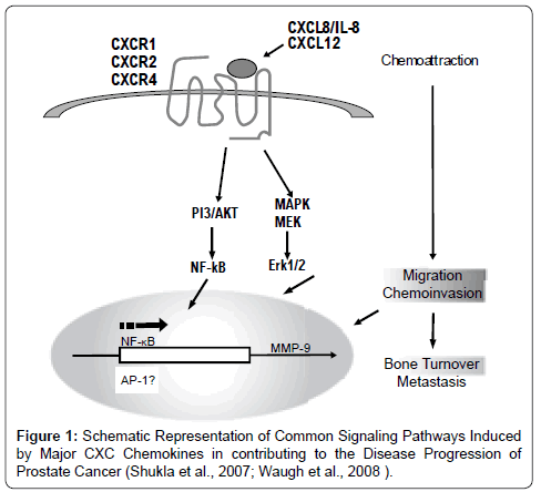 cancer-science-therap-Common-Signaling