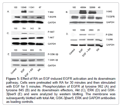 cancer-science-therapy-EGFR-activation