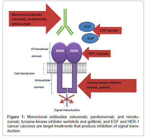 cancer-science-therapy-Monoclonal-antibodies