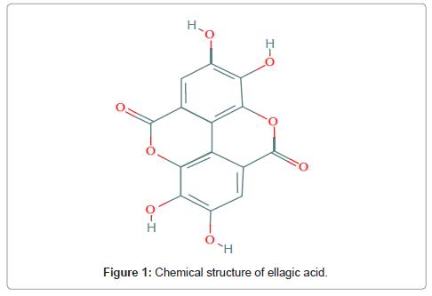 cancer-science-therapy-ellagic-acid