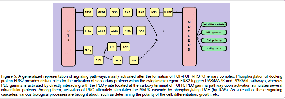cancer-science-therapy-signaling-pathways