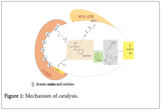 cancer-surgery-mechanism-catalysis
