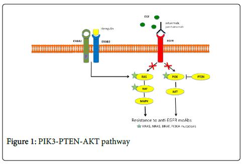 carcinogenesis-mutagenesis-AKT-pathway