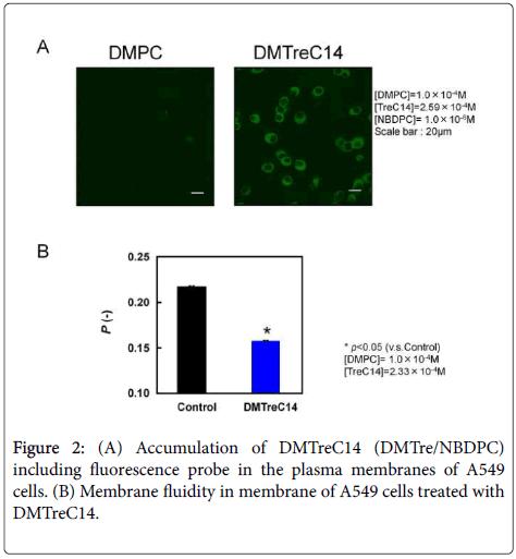 carcinogenesis-mutagenesis-Accumulation-plasma