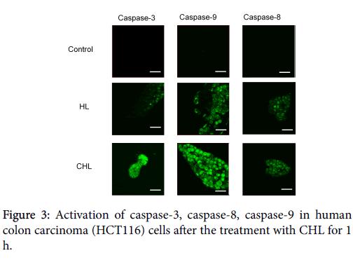 carcinogenesis-mutagenesis-Activation-of-caspase