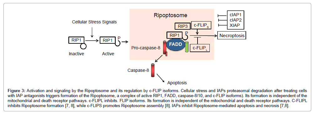 carcinogenesis-mutagenesis-Activation-signaling