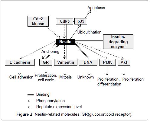 carcinogenesis-mutagenesis-Binding-acid