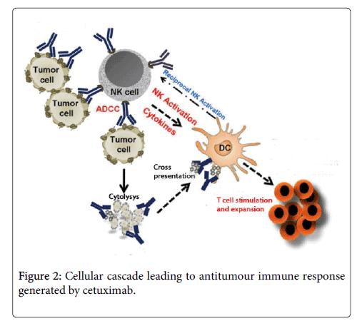 carcinogenesis-mutagenesis-Cellular-cascade