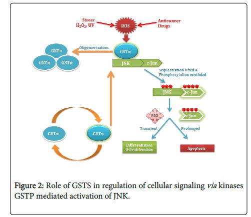 carcinogenesis-mutagenesis-GSTS-regulation