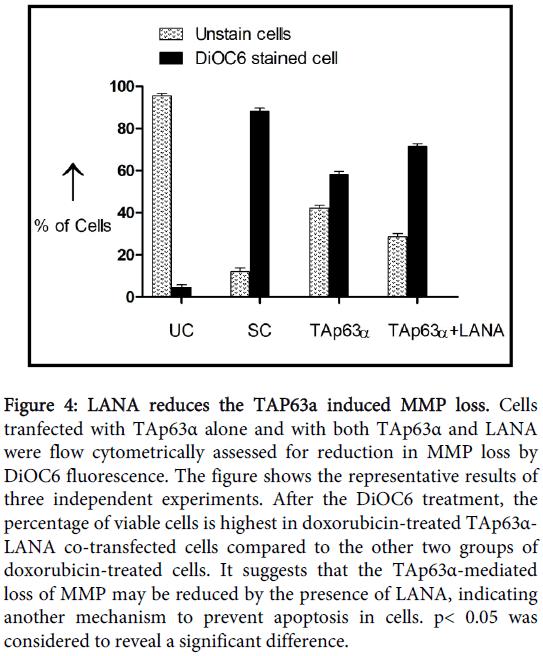 carcinogenesis-mutagenesis-LANA-reduces-TAP63a
