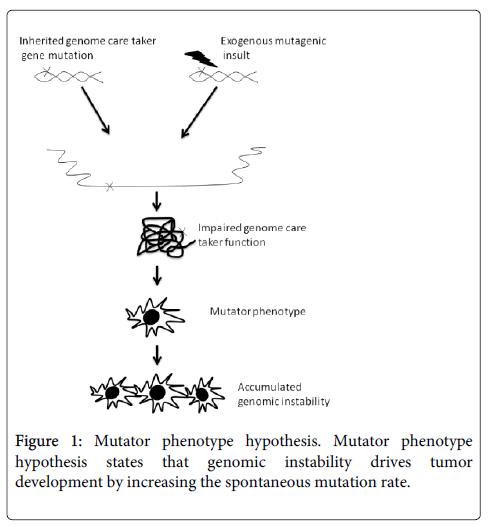 carcinogenesis-mutagenesis-Mutator-phenotype
