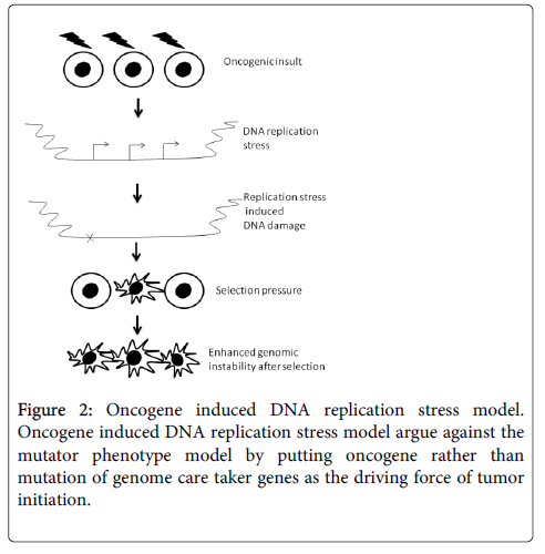 carcinogenesis-mutagenesis-Oncogene-induced