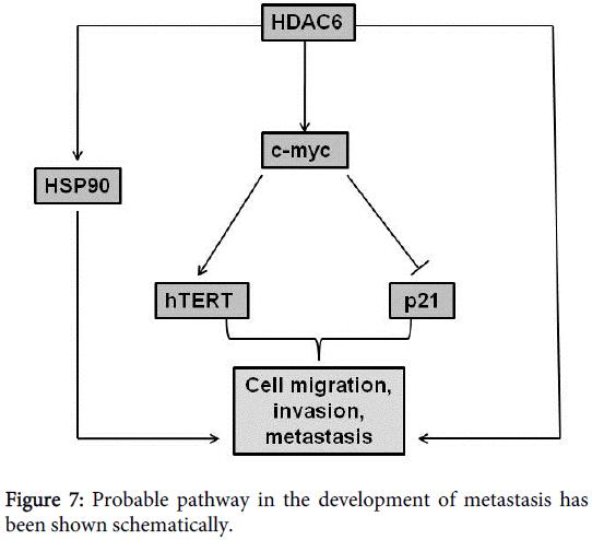 carcinogenesis-mutagenesis-Probable-pathway