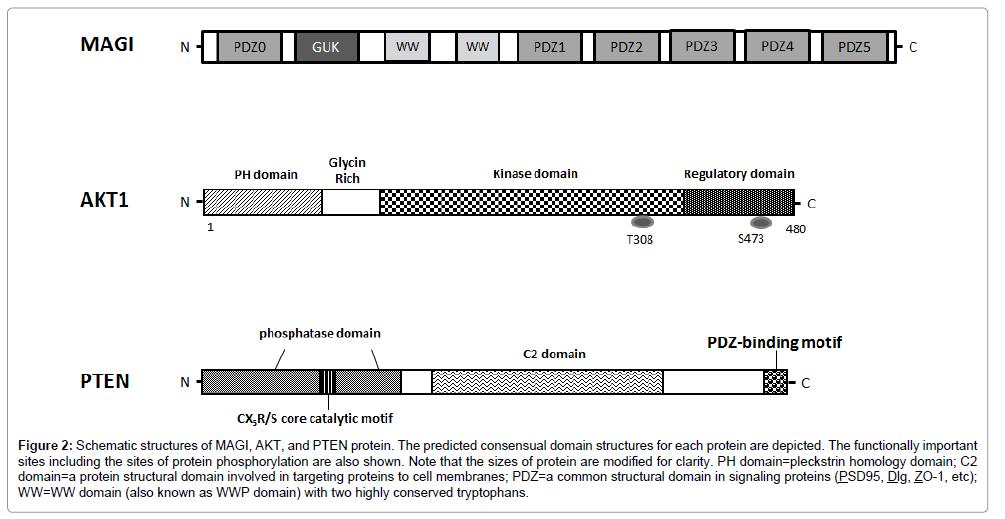 carcinogenesis-mutagenesis-Schematic-structures