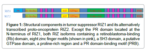 carcinogenesis-mutagenesis-Structural-components