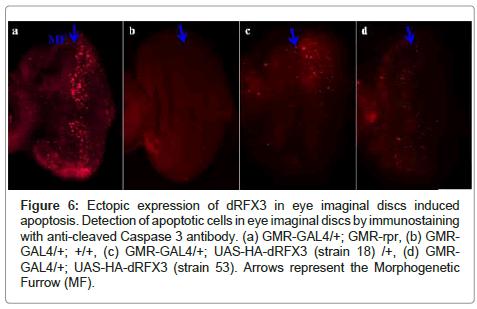 carcinogenesis-mutagenesis-apoptotic-cells