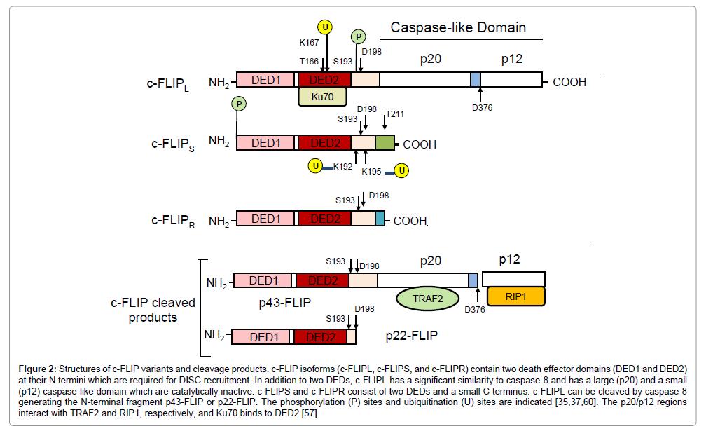 carcinogenesis-mutagenesis-cleavage-products
